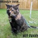 Cat Leash Laws