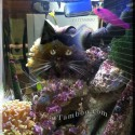 Cats and Aquariums