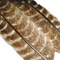Hunters save your turkey feathers