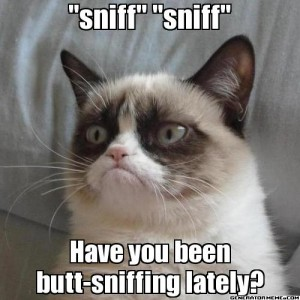 angry-cat-butt-sniff-meme