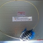 Buy cat toys online - Blue Wild Turkey feather toys.