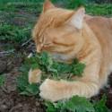 cat aphrodisiacs
