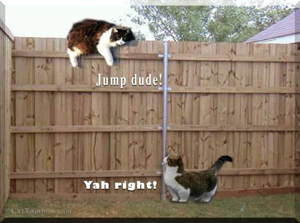 Munchkin cat meme