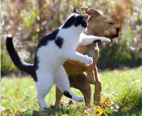 cat swats a dog