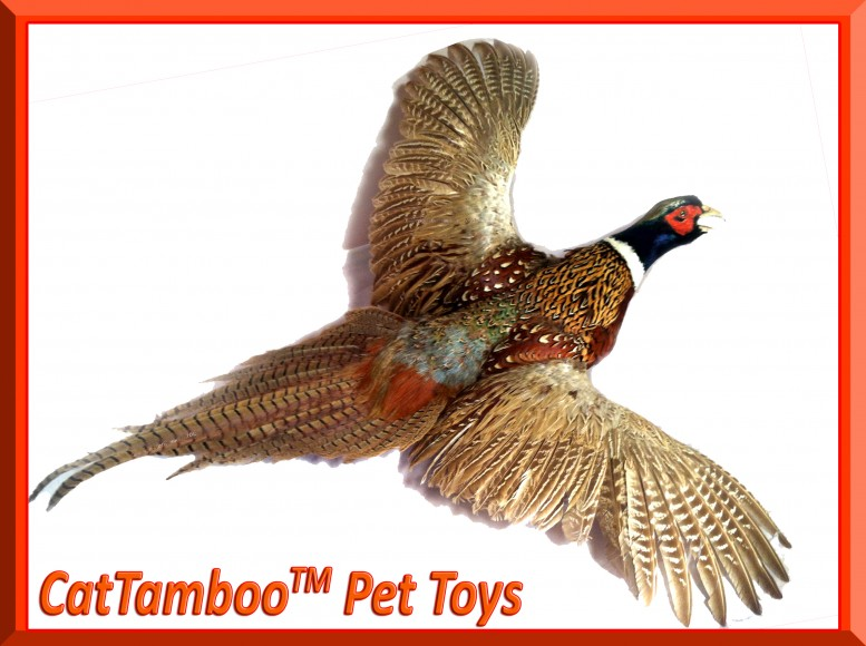 pheasant feather toys