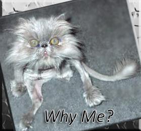 weird-gray-cat-meme-why-me