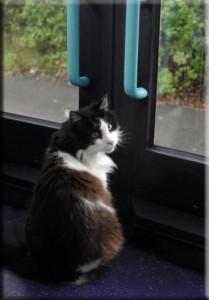 casper-commuting-cat