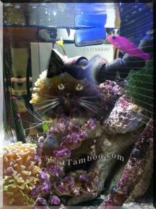 cat art with reef aquarium