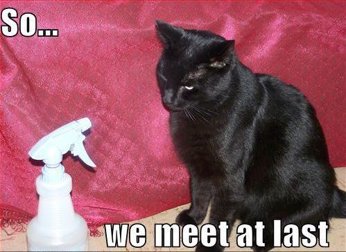 cat meme spray bottle