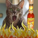 Mo cats favorite hot sauce!