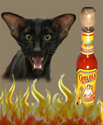 demon cats favorite hot sauce