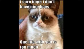 famous cats meme grumpy cat