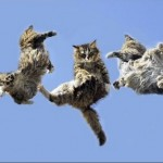 CAT ANGLES WHILE FALLING