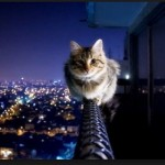 CAT ON NEW HEIGHTS