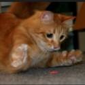 Are laser pointers bad for cats?