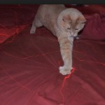 are laser pointers bad for cats