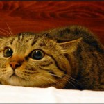 HOW CATS COMMUNICATE WITH THEIR EYES