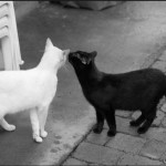HOW CATS COMMUNICATING WITH SCENT MARKING
