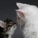 CATS COMMUNICATING WITH TOUCH