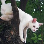 STRANGE THINGS CATS DO LIKE CLIMBING DOWN TREES