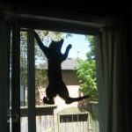 STRANGE THINGS CATS DO LIKE CLIMBING THE SCREEN DOOR